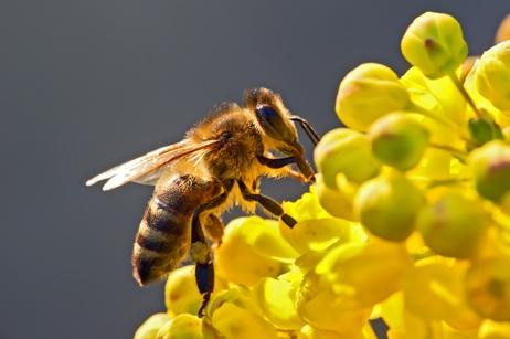 http://www.verreriesperrin.fr/wp-content/uploads/2014/10/abeille.jpg